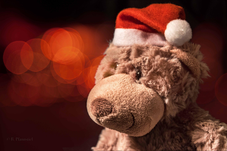 Der Weihnachtsbär